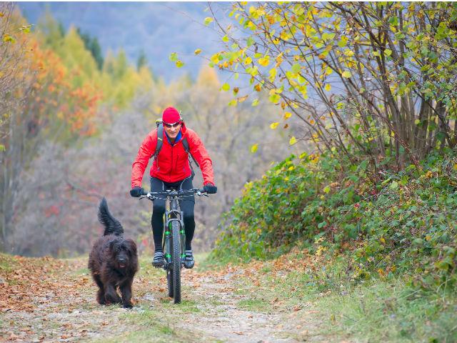 bicicleta con perro