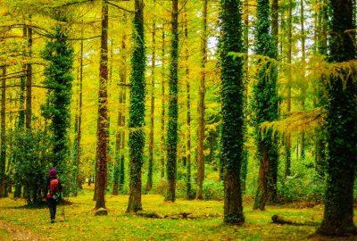 bosques perfectos para descubrir en otoño