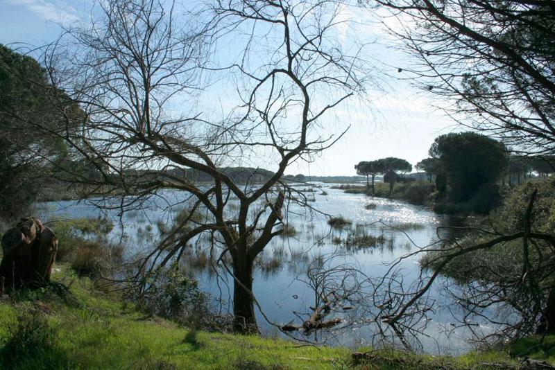 Atardecer en Doñana (Huelva y Sevilla, Andalucía)