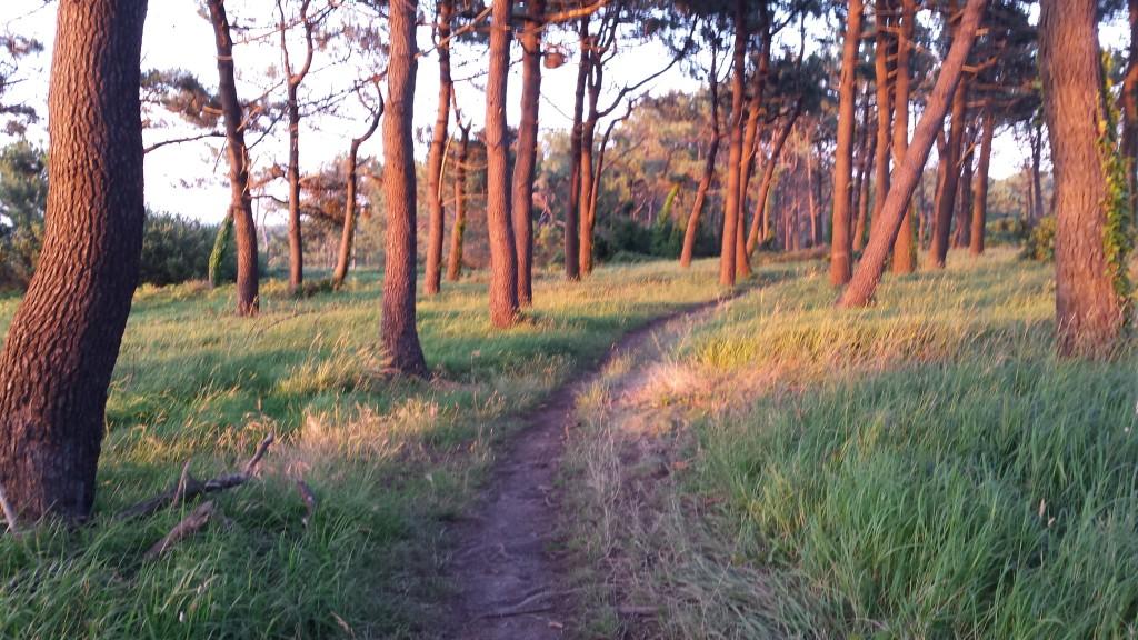 sendero por un bosque