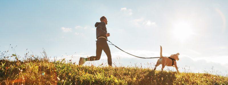 canicross running perro